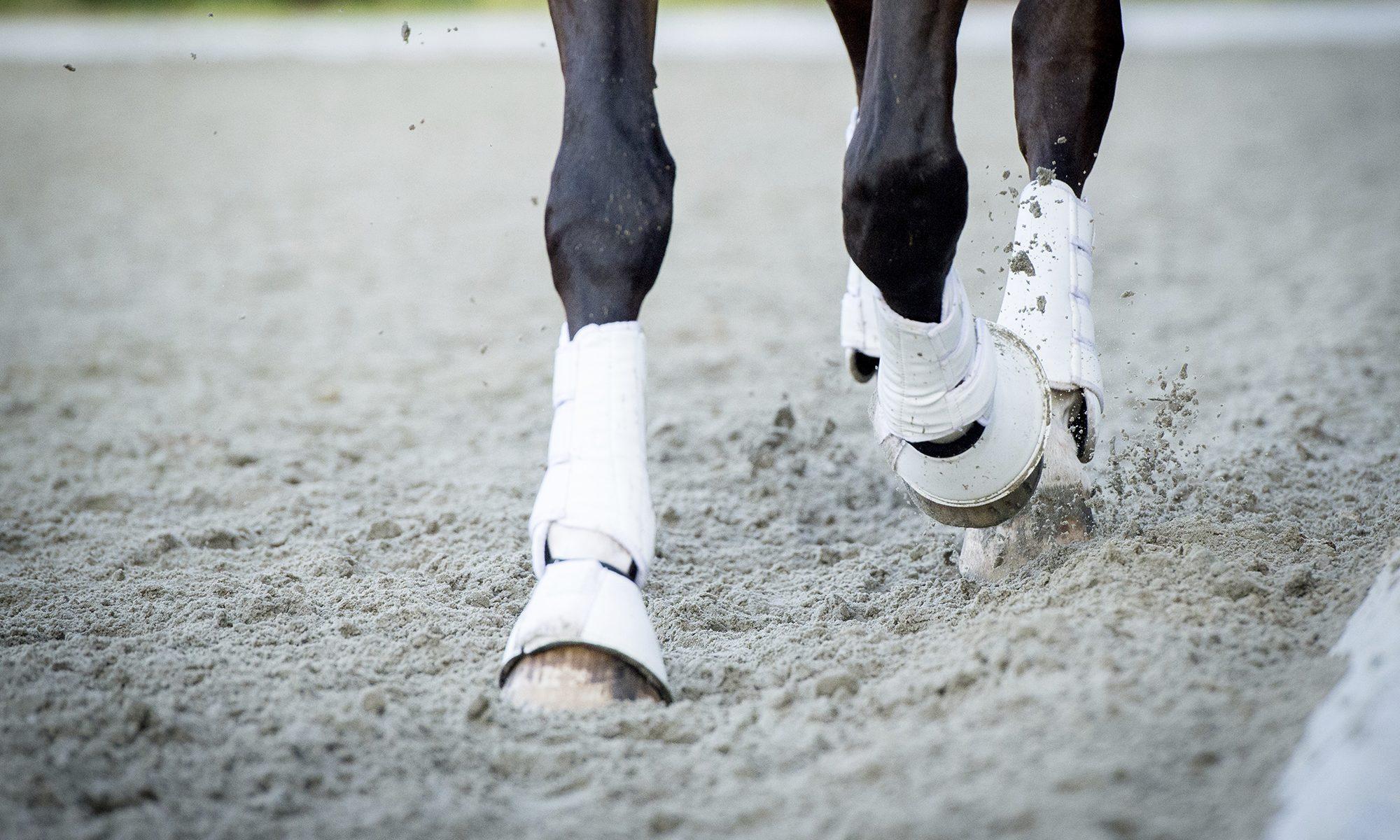 Die Pferdetherapie